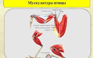 Формы естественного отбора – биология