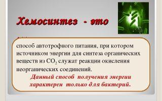 Хемосинтез – биология
