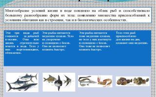 Места обитания и внешнее строение рыб – биология
