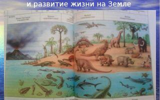 Эволюция жизни на земле – биология