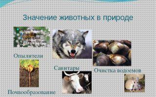 Значение и разнообразие животного мира – биология