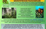 Охрана биогеоценозов как путь сохранения биоразнообразия – биология