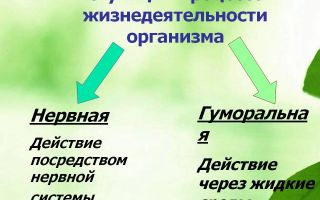 Регуляция процессов жизнедеятельности – биология