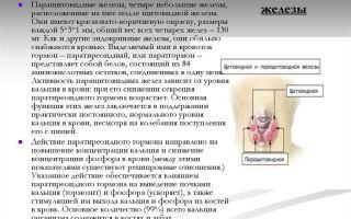 Щитовидная и околощитовидные железы. надпочечники – биология