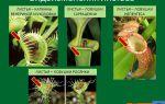 Лист. строение. многообразие и видоизменения листьев – биология