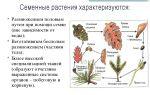 Семенные растения: общая характеристика – биология