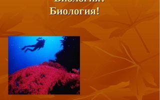 Жизнь организмов в природе – биология