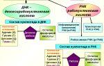 Нуклеотиды и нуклеиновые кислоты – биология