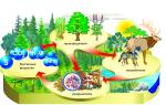 Экологические системы – биология