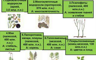Эволюция высших растений – биология