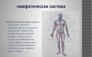 Сосудистая система. лимфообращение – биология