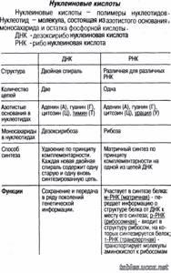 нуклеиновые кислоты биология 10