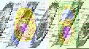 клетка растения названия что