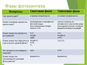 кэтрин подробное описание процесса фотосинтез середине полоски