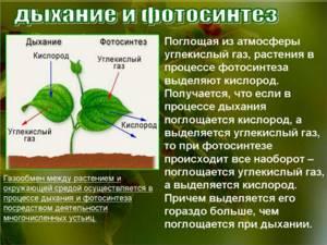 сегодня, цвет листа и фотосинтез это хищный